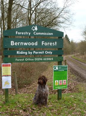 Bernwood Forest