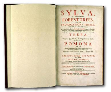 Evelyn-Sylva