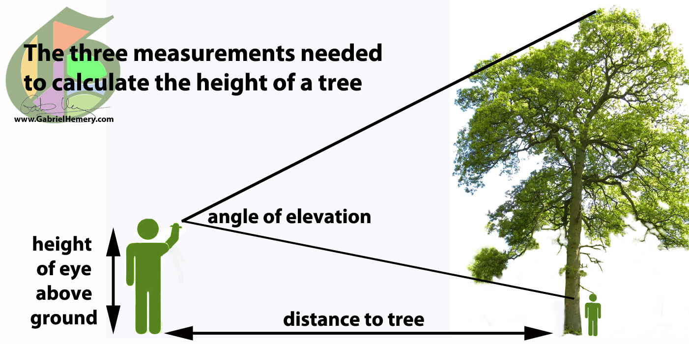 how to calculate tree height