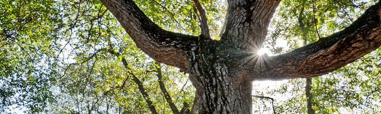 Walnut forest in Kyrgyzstan