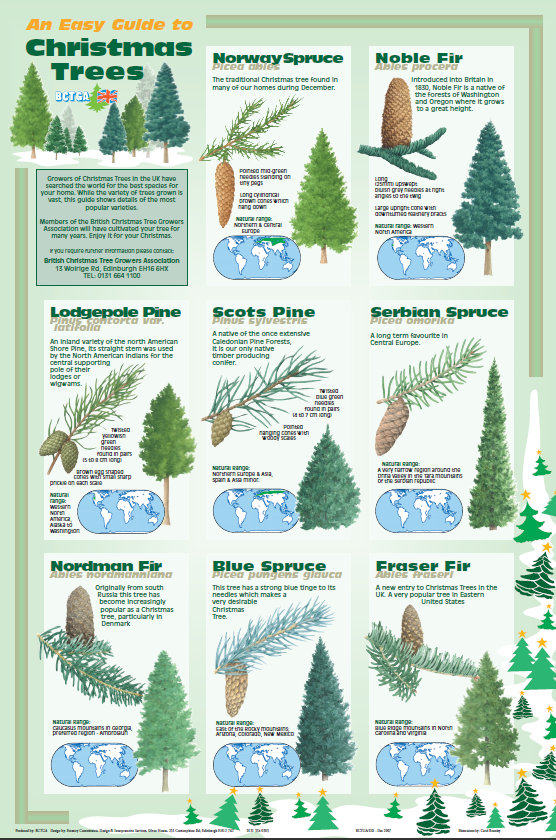 Good Christmas Tree Species Guide Part - 3: ... Size Image Dimensions: 556 × 840 Image Parent Post: Christmas Tree Guide