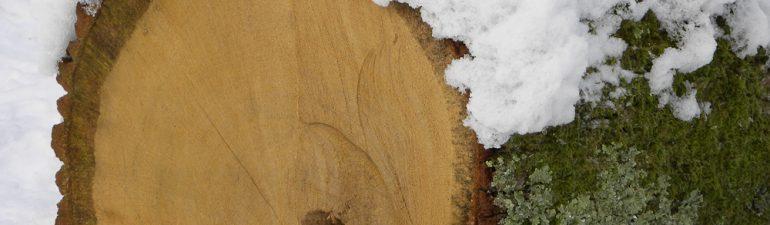 oak log in snow