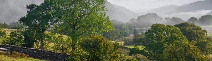 Ash trees at dawn in Cumbria
