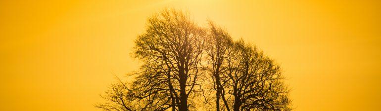 A new dawn - a new year