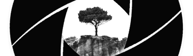 The Tree Photographer