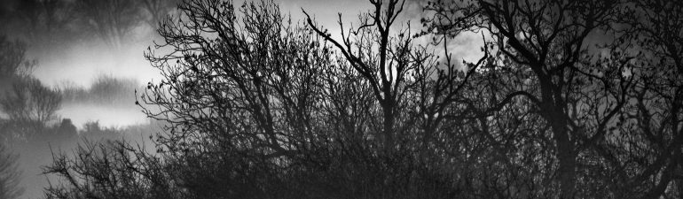Moody treescape by Gabriel Hemery