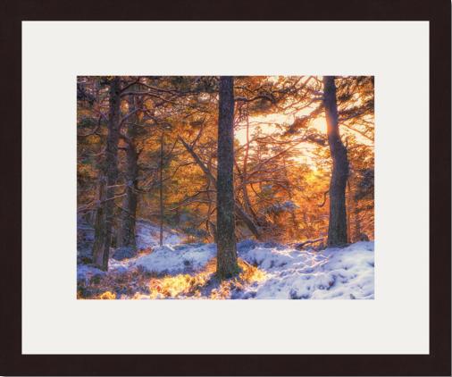 Caledonian pinewood by Gabriel Hemery