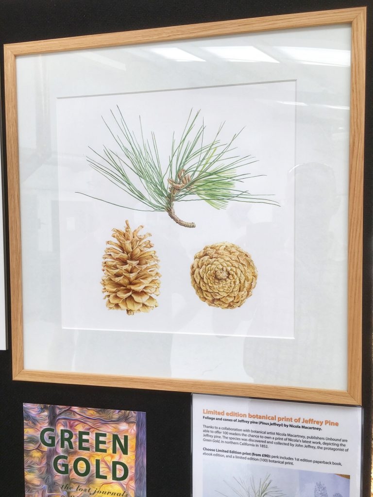 Jeffrey pine limited edition print